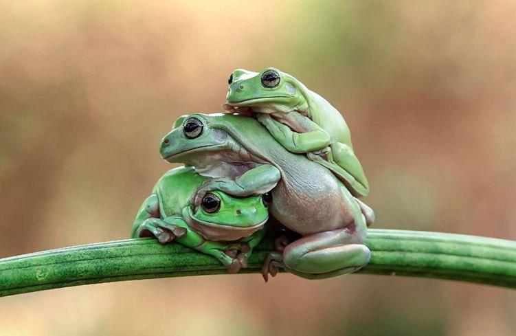 21-frog-family