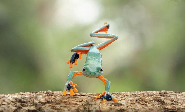 3-good-jump-captured