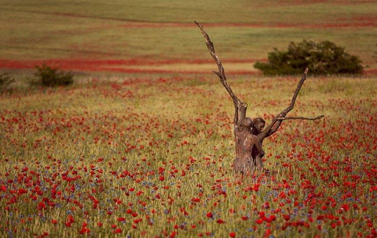 camouflage-bodypainting-metamorphosis-leonie-gene-jorg-dusterwald-22-5718a9b7bb851__700