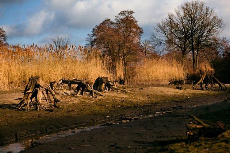 camouflage-bodypainting-metamorphosis-leonie-gene-jorg-dusterwald-5-5718a9945d3fe__700
