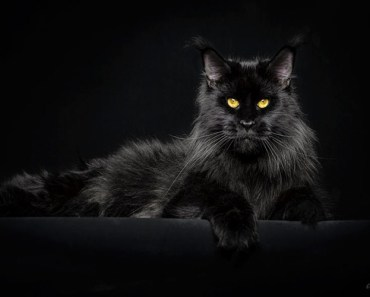 30 Photos Of Mythical Beasts: Photograper Captures The Majestic Beauty Of Maine Coons
