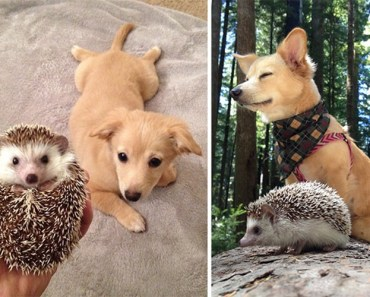30. Adorable Before And After Pictures Of Animals Growing Up