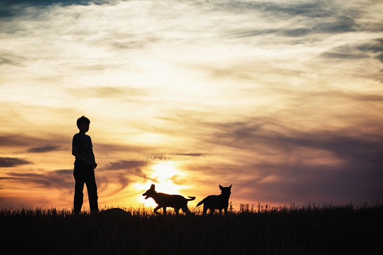 Silhouette of Kid together with Dogs