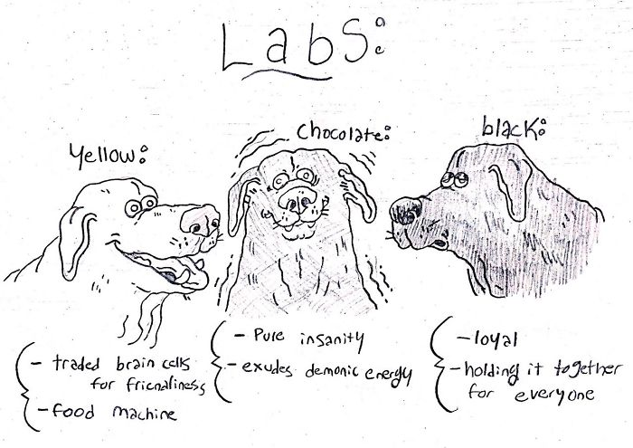 24 Comical Dog Breed Drawings To Help You Pick Out Your