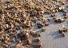 Brazil Has Lost 500 Million Bees VIRALLK.COM PUBLICATION HUB (1)
