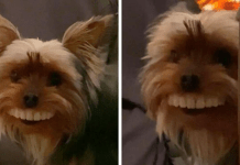 Dog Runs Off With Owner's Dentures