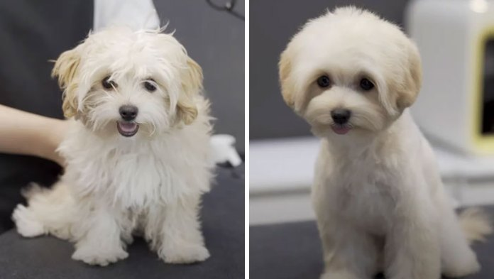 Amazing Dog groom transformations Before and after