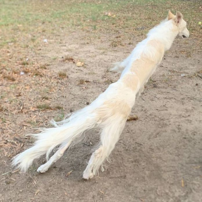 Very Long Dog With Even Longer 12.2-Inch Snout Eris Lily and Savannah