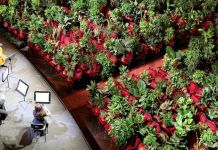Barcelona Opera House Reopens With A Performance In Front Of A Majestic Crowd Of 2,292 Plants