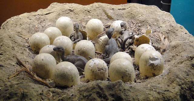 Chinese Boy Accidentally Finds 66-Million-Year-Old Dinosaur Eggs