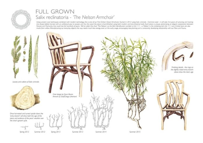 Full grown furniture from tree