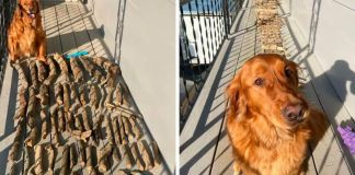 Dog Shows His Dad How Proud He Is Of His Stick Collection