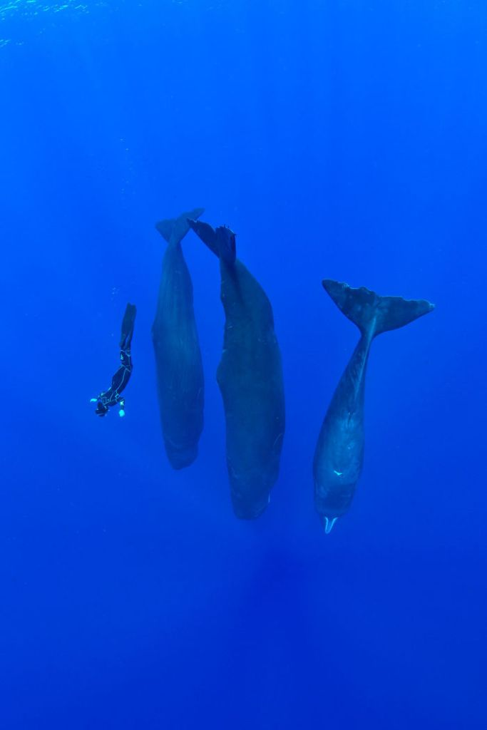 Photographer Captures Incredibly Rare Sight Of Sperm Whales Sleeping