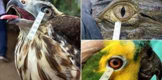 Birds and reptiles cry similar tears to humans, says new research