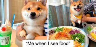 Shiba Inu Goes Viral For His Love Of Smiling, Especially After Seeing Food