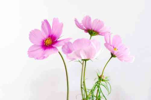 beautiful flower images wallpapers