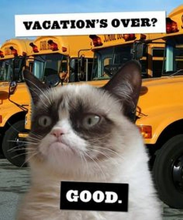 Meme Vacations Over Viral Viral Videos
