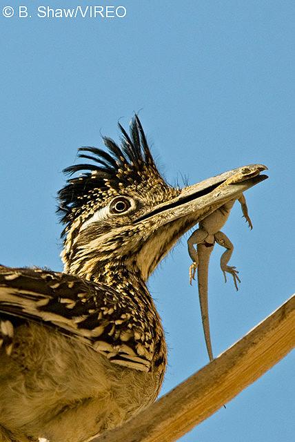 What Do Birds Eat