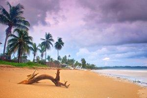 Trinidad & Tobago Islands Services