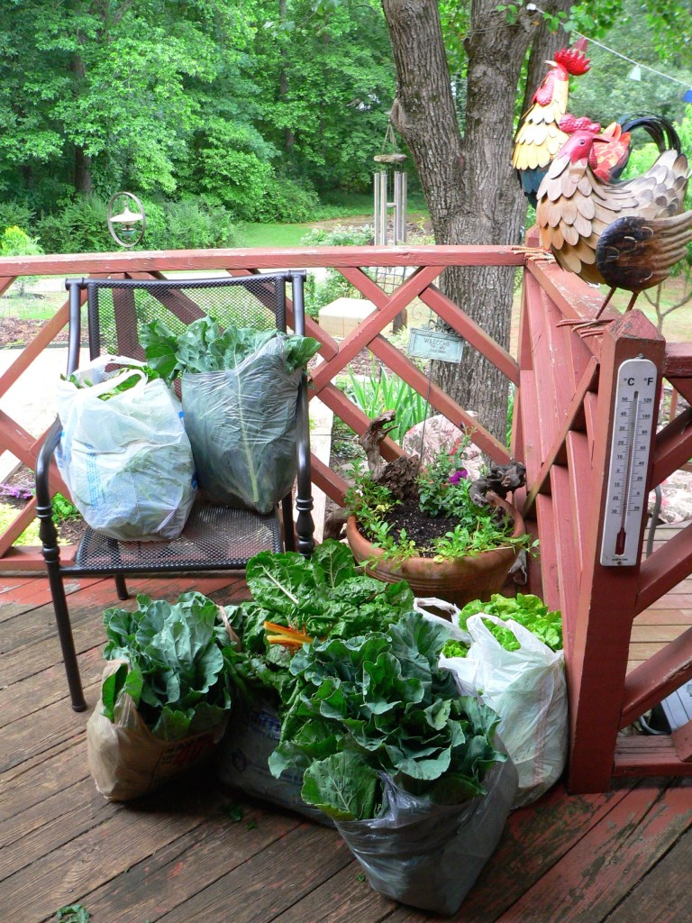 From this past summer, greens waiting on the kitchen porch to be washed, chopped and frozen in vacuum sealed bags.