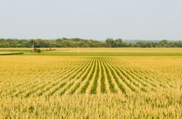 Food Crop Donation Tax Credit
