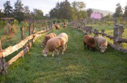 wisteria farm and winery