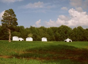 White Farm Buildings as Seen Across a Bountiful Soybean Field, Caroline County, VA