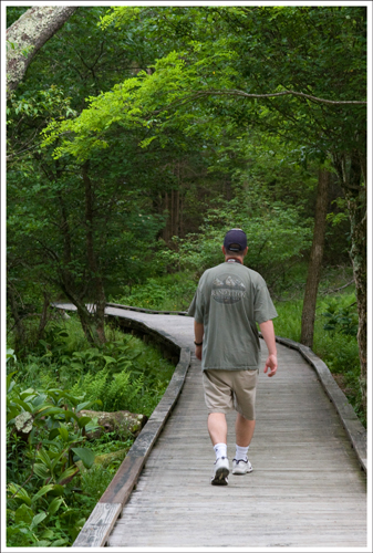 Part of the Limberlost Trail is along a boardwalk.