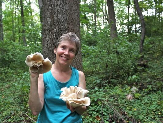 oyster mushrooms in Septmeber