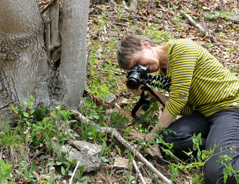 Capturing Robin's Plantain