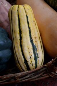 delicata squash on www.virginiawillis.com