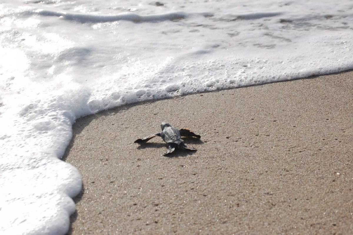 World Oceans Day on www.virginiawillis.com