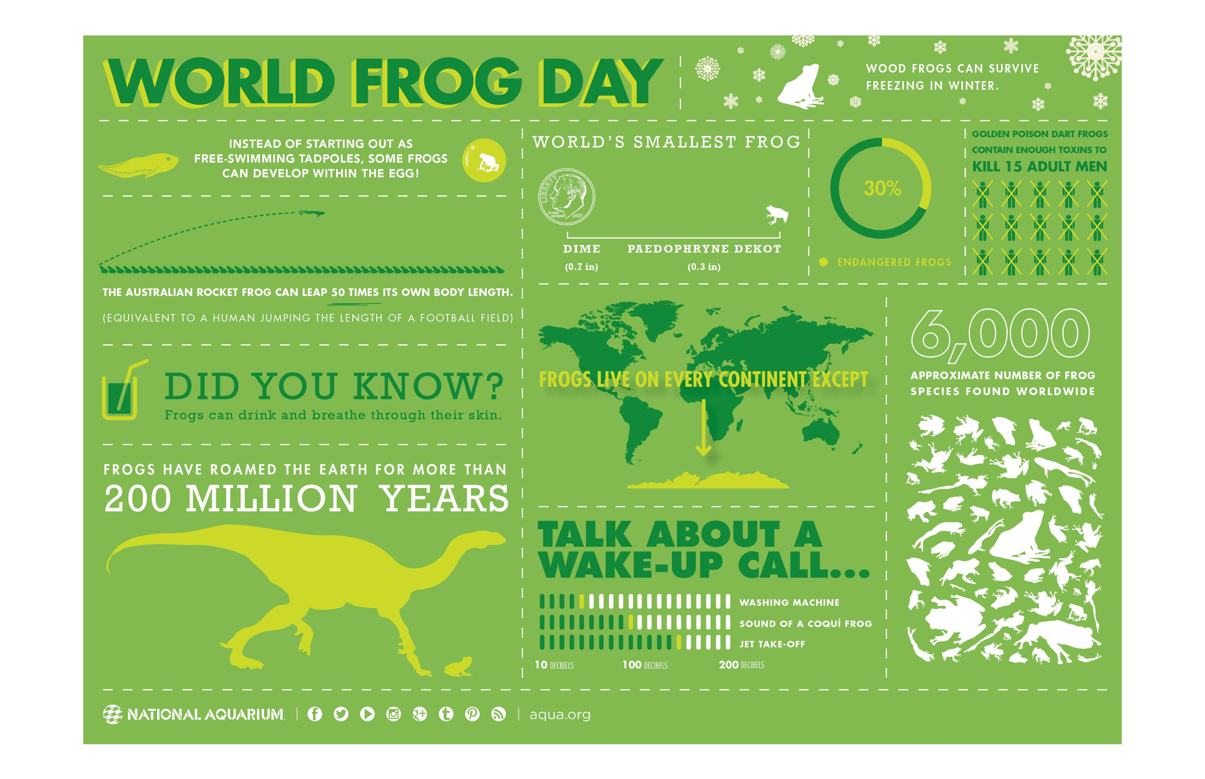 World Frog Day Infographic