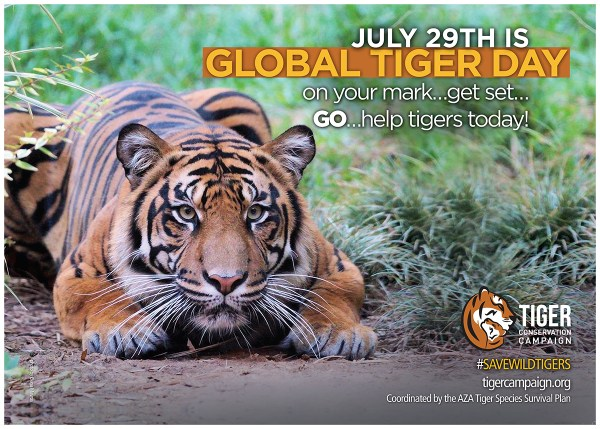2016Global Tiger Day_posterFinal small