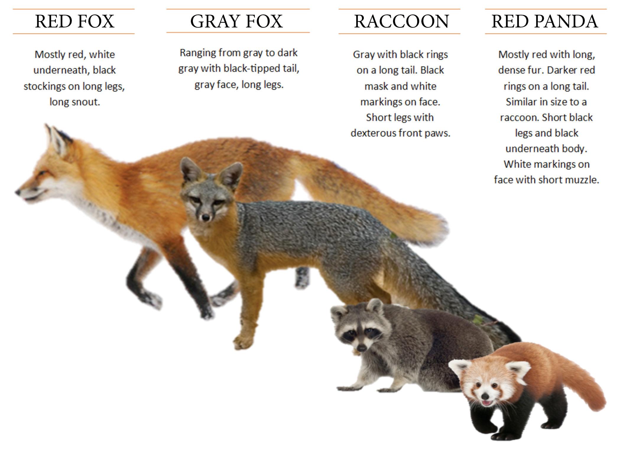 panda life cycle diagram fluid mosaic virginia zoo red is missing from habitat