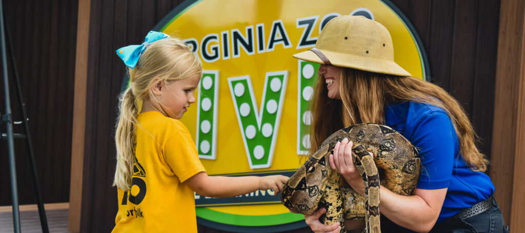 zoo educator wearing safari hat holds ball python while girl touches snake