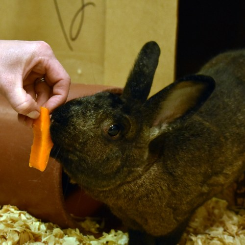 rabbit being hand-fed by zoo keeper