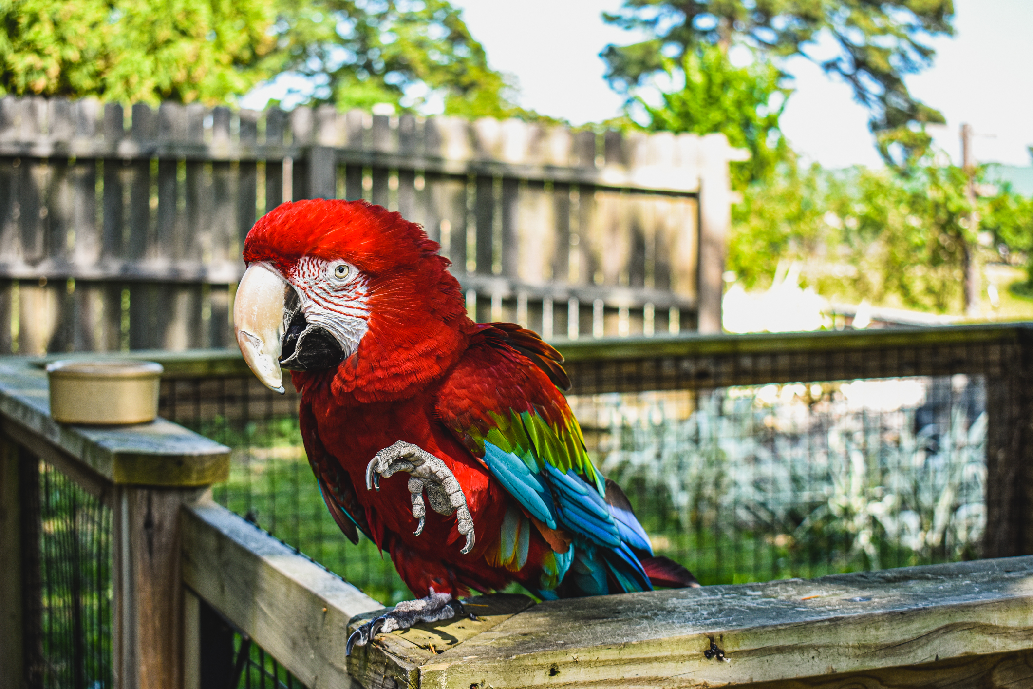 macaw standing on one foot