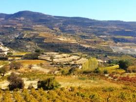 Vineyards of Omodos