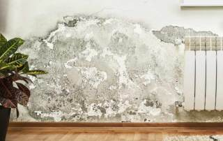 Hidden hazards of water damage. Mould and flood testing by Viridis Australia, Brisbane.
