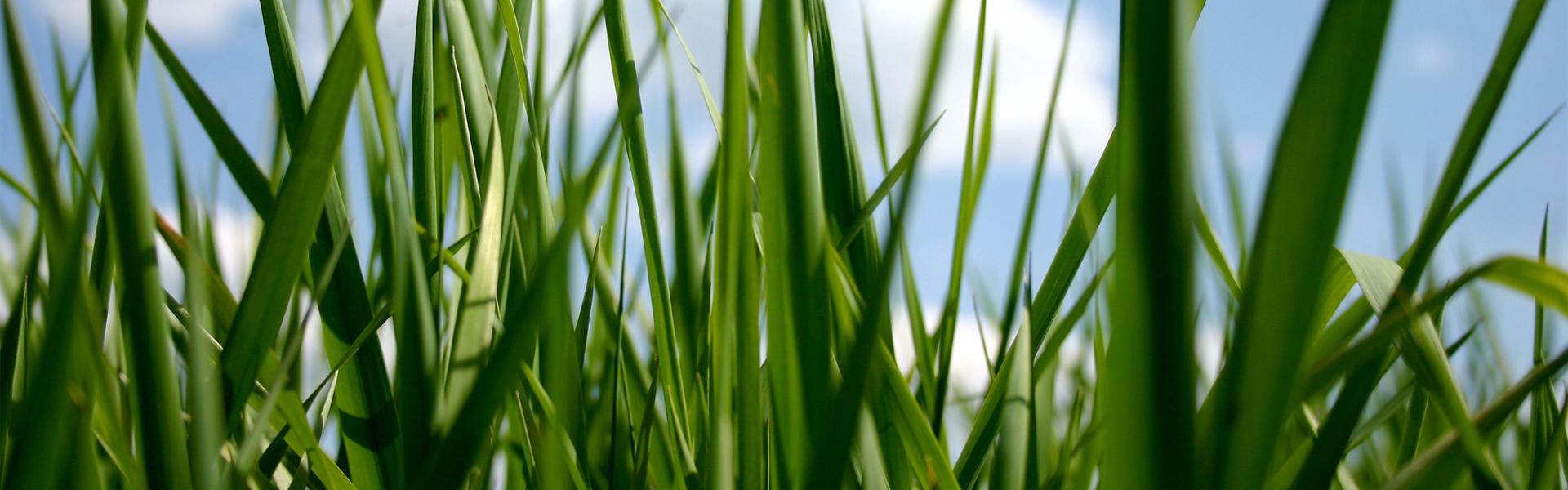 slide-5-lawn-care