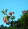 bloom-moon-700