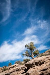 161210-san-lorenzo-canyon-0974