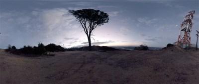 VR360 Survival Tree