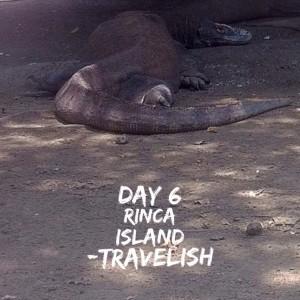 Hari ke-6, Pulau Rinca