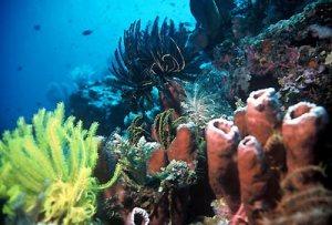bunaken-reef