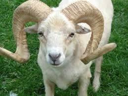 Vient de paraître 'Le Mouton Haram'' d'Henri D.Hessou: Une histoire invraisemblable à faire pleurer de rire