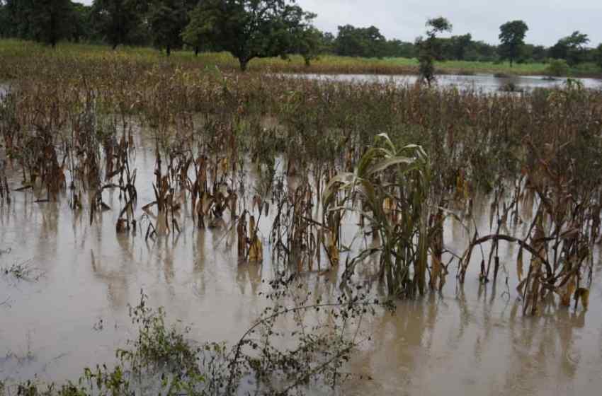 Djougou : Plusieurs hectares de cultures vivrières sous les eaux à Bariénou