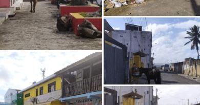 O que mudou na 'nova história' com os animais e o lixo na cidade