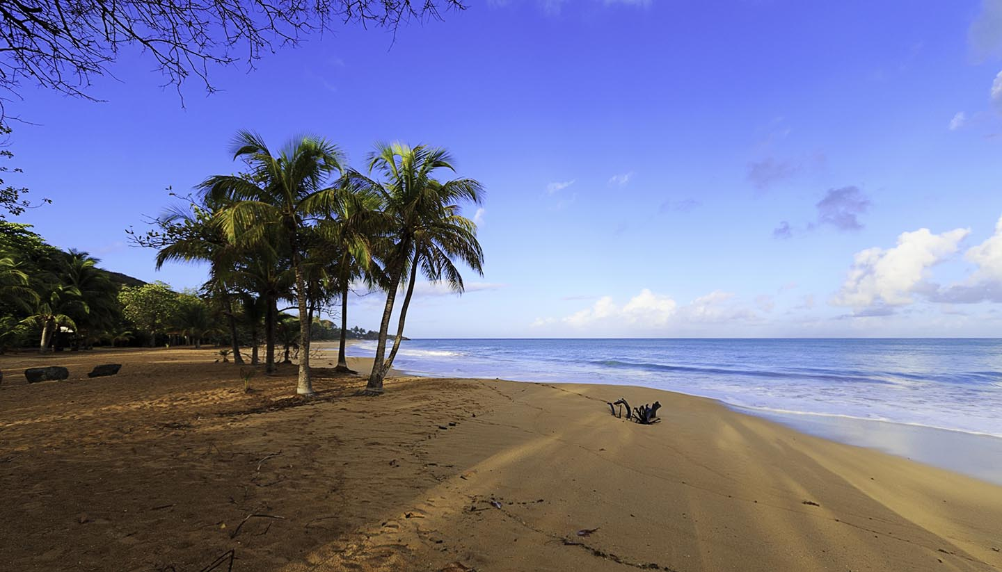 We are now able to welcome vaccinated American travelers to Guadeloupe & JetBlue service from the U.S. will resume soon.